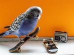 Trieste Visier - Skateboarding Budgies